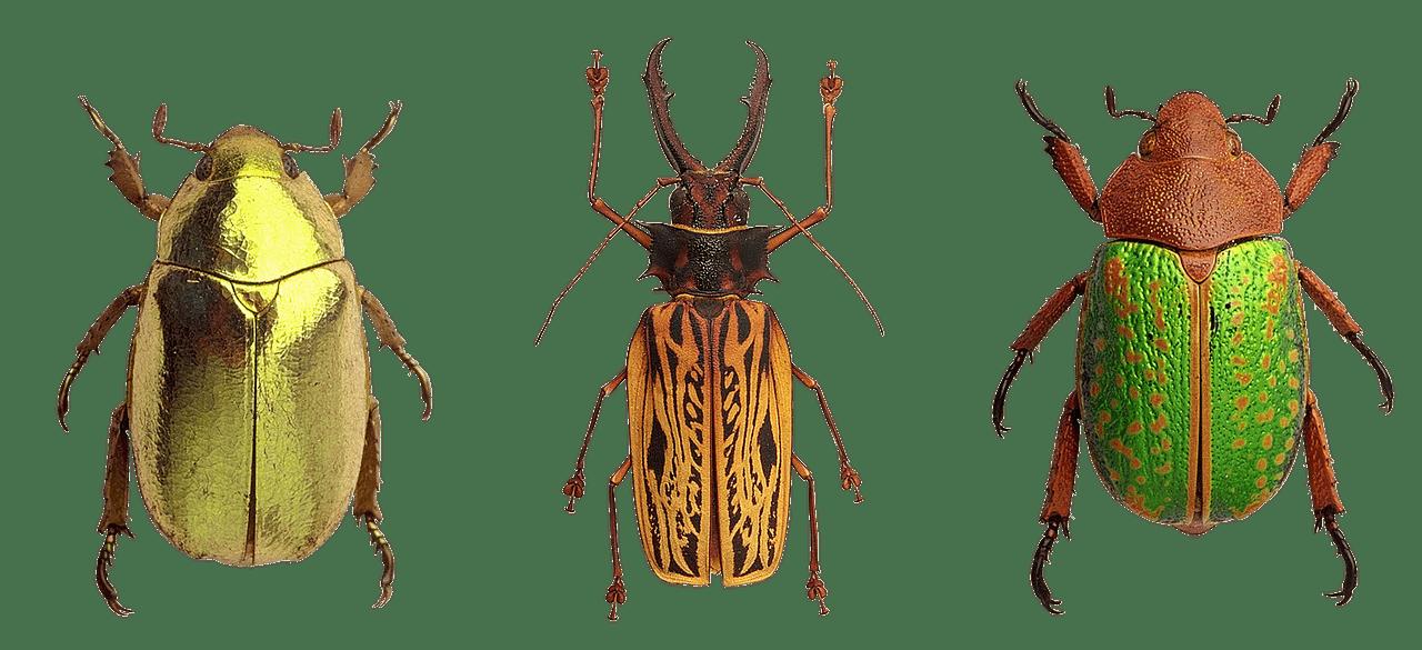 verschiedene Käfer freigestellt