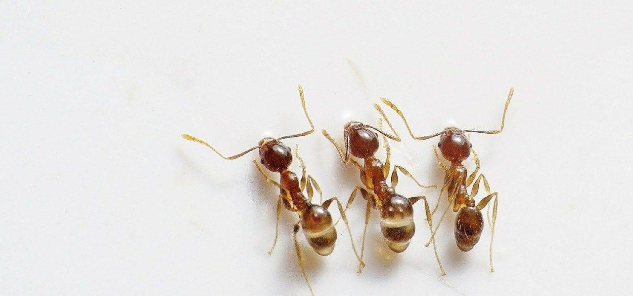 ants-498731_1280